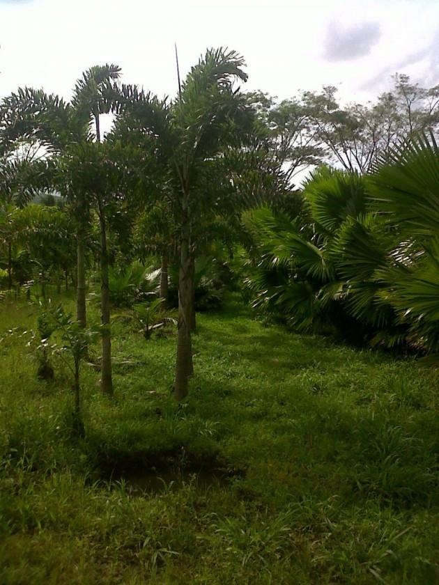 Caruao06_IMG01159-20120303-1456